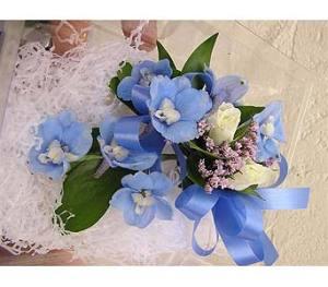 hybrid blue delphinium