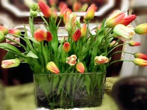 mix-tulips