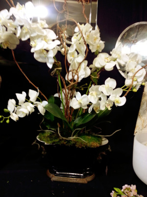 white-phalaenopsis-orchid