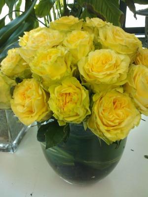 yellow-garden-rose